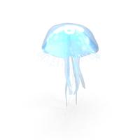 Moon Jellyfish (Aurelia Aurita) PNG & PSD Images