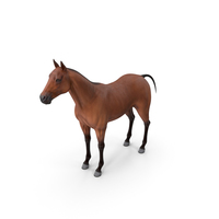 Bay Horse PNG & PSD Images