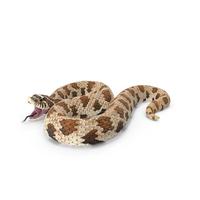 Brown Hognose Snake Attack Pose PNG & PSD Images