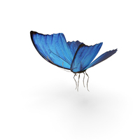 Butterfly Blue Morpho PNG & PSD Images