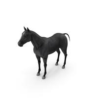 Horse Black PNG & PSD Images