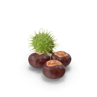 Horse Chestnut Set PNG & PSD Images