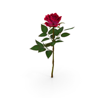 Rose Red PNG & PSD Images