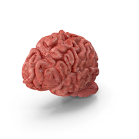 Human Brain Left Hemisphere PNG & PSD Images