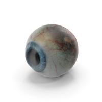 Human Eye PNG & PSD Images