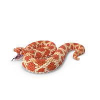 Red Hognose Snake Attack Pose PNG & PSD Images