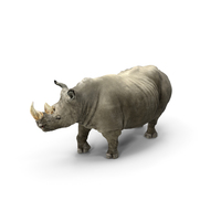 Rhino Adult Standing Pose PNG & PSD Images