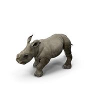 Rhino Baby Walking Pose PNG & PSD Images