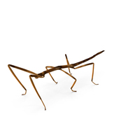 Stick Insect Brown PNG & PSD Images