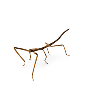 Stick Insect Brown Walking Pose PNG & PSD Images