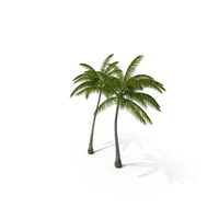 Tall Coconut Palm Trees PNG & PSD Images