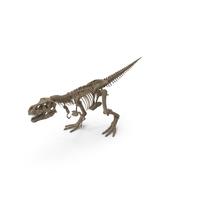 Tyrannosaurus Rex Skeleton Fossil Walking Pose PNG & PSD Images