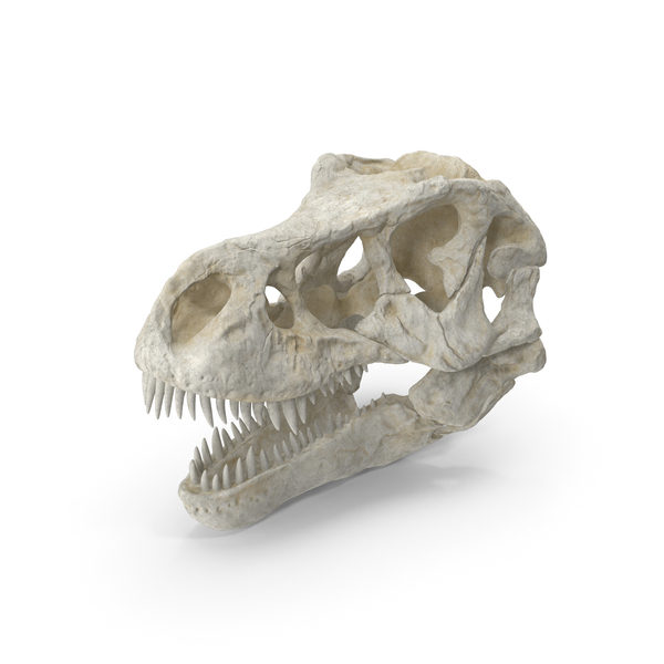 Tyrannosaurus Rex Skull PNG & PSD Images