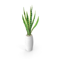 Snake Plant PNG & PSD Images