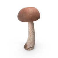 Boletus Mushroom PNG & PSD Images