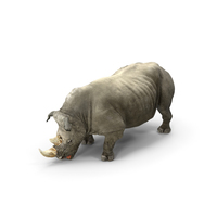 Adult Rhino Drinking Pose PNG & PSD Images