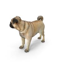 Pug Dog Fur PNG & PSD Images