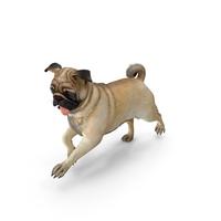 Pug Dog Run Pose Fur PNG & PSD Images