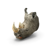 Rhino Head PNG & PSD Images