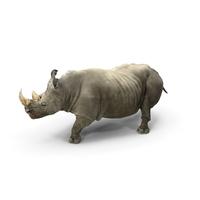 Rhino Walking Pose PNG & PSD Images