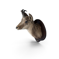 Taxidermy Chamois Head PNG & PSD Images