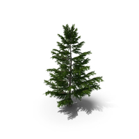 Pine Tree Low Polygon Set PNG & PSD Images