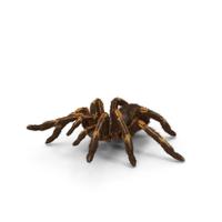 Tarantula Yellow Attack Pose PNG & PSD Images