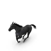 Gallop Pose Horse Fur PNG & PSD Images
