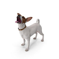Jack Russell Terrier White Waiting Pose PNG & PSD Images