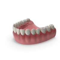 Lower Teeth Medical Model With Dental Implant PNG & PSD Images