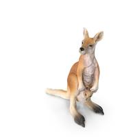 Kangaroo PNG & PSD Images