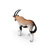 Oryx PNG & PSD Images