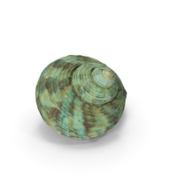 Seashell PNG & PSD Images