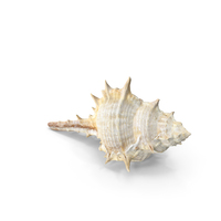 Seashells PNG & PSD Images