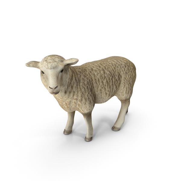 Sheep PNG & PSD Images