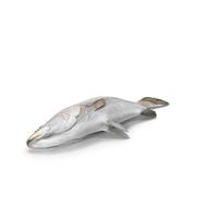 Asian Sea Bass Fish Lying PNG & PSD Images