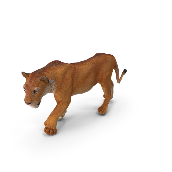 Lioness PNG & PSD Images