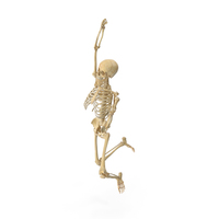 Real Human Female Skeleton Pose PNG & PSD Images