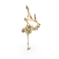 Human Female Skeleton Pose PNG & PSD Images