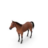 Bay Horse Fur PNG & PSD Images