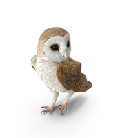 Barn Owl Standing PNG & PSD Images