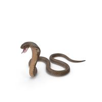 Beige Cobra Attack Pose PNG & PSD Images