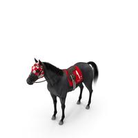 Black Racing Horse Fur PNG & PSD Images