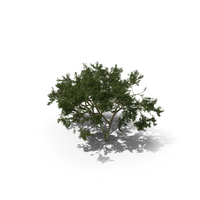 African Tree PNG & PSD Images
