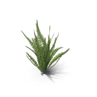 Healthy Fern PNG & PSD Images