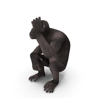 Dark Chimpanzee Sitting PNG & PSD Images
