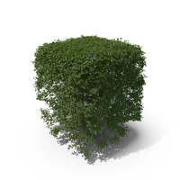 Topiary PNG & PSD Images