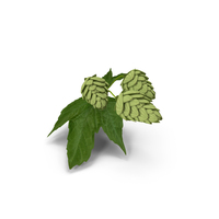 Fresh Branch of Hops PNG & PSD Images