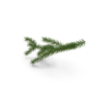 Green Pine Branch PNG & PSD Images