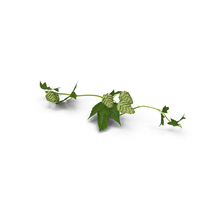 Hops Branch PNG & PSD Images